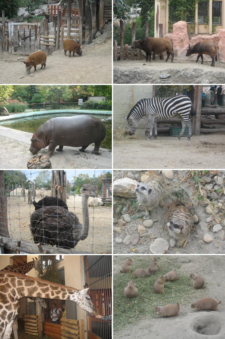 Венгрия, Будапешт, посетить зоопарк
